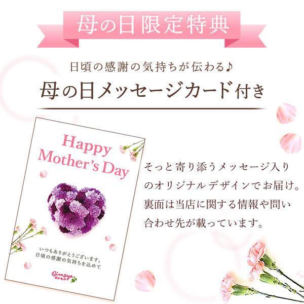 母の日 ギフト 花 母の日 プレゼント カーネーション 鉢植え 花鉢 お菓子 スイーツ 2020 ギフトランキング 5号鉢 oimoya 19