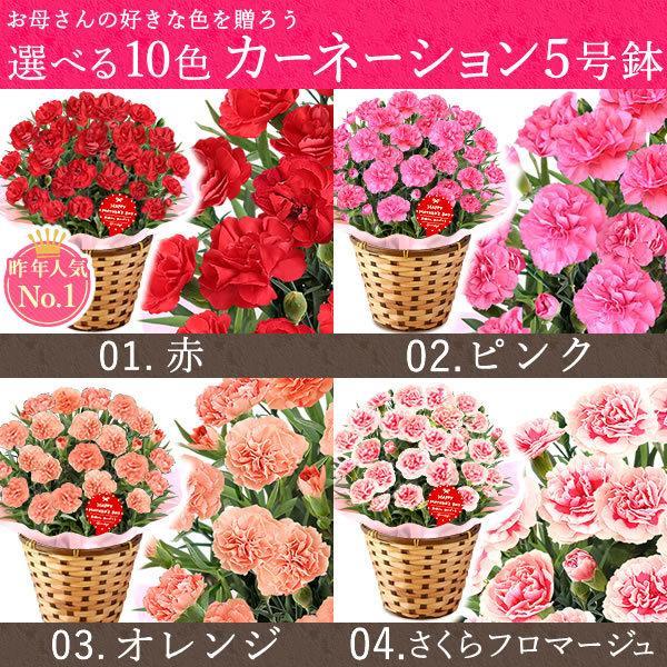母の日 ギフト 花 母の日 プレゼント カーネーション 鉢植え 花鉢 お菓子 スイーツ 2020 ギフトランキング 5号鉢 oimoya 06