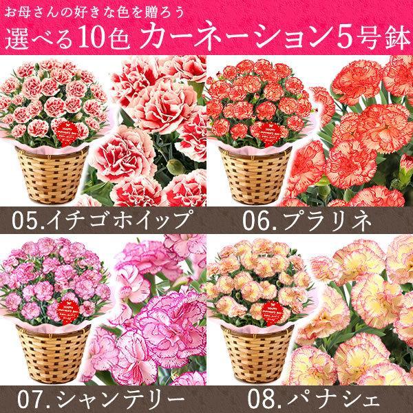 母の日 ギフト 花 母の日 プレゼント カーネーション 鉢植え 花鉢 お菓子 スイーツ 2020 ギフトランキング 5号鉢 oimoya 07