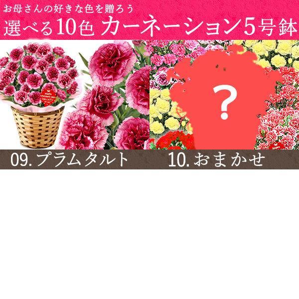 母の日 ギフト 花 母の日 プレゼント カーネーション 鉢植え 花鉢 お菓子 スイーツ 2020 ギフトランキング 5号鉢 oimoya 08