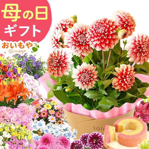 母の日 ギフト 母の日プレゼント ランキング mothersday 2019 花 鉢植え 花 スイーツ|oimoya
