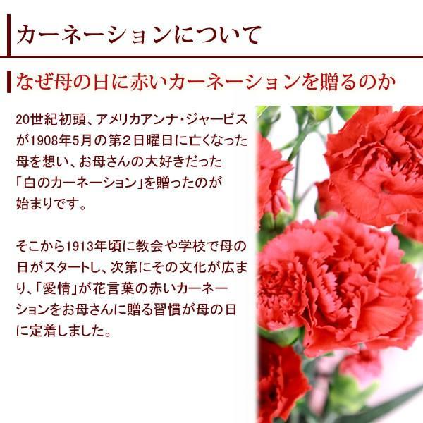 母の日ギフト ランキング プレゼント 2018 花 カーネーション アレンジメント スイーツセット 赤|oimoya|04