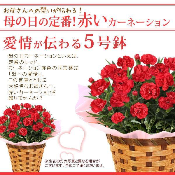 母の日 花 ギフト 母の日プレゼント スイーツ 2019 mothersday カーネーション 鉢植え お菓子|oimoya|02