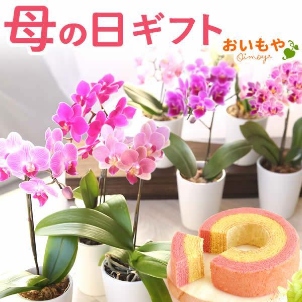 母の日 ギフト 花 母の日 花鉢 プレゼント 花とスイーツ 2020 ギフトランキング 胡蝶蘭 鉢植え お菓子|oimoya