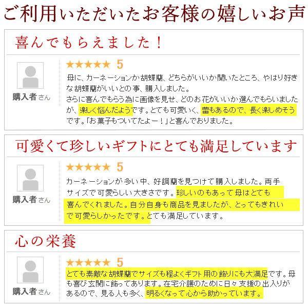 敬老の日 プレゼント ギフト ランキング スイーツ 花 胡蝶蘭とスイーツセット|oimoya|11