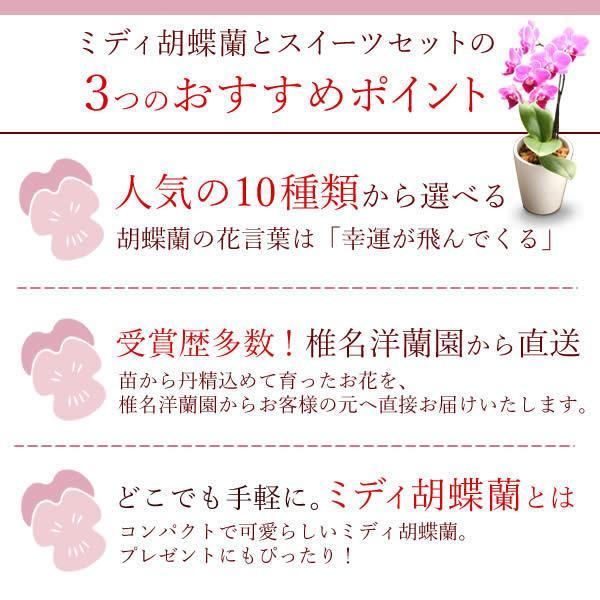 母の日 ギフト 花 母の日 花鉢 プレゼント 花とスイーツ 2020 ギフトランキング 胡蝶蘭 鉢植え お菓子|oimoya|03