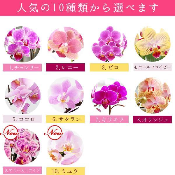 母の日 ギフト 花 母の日 花鉢 プレゼント 花とスイーツ 2020 ギフトランキング 胡蝶蘭 鉢植え お菓子|oimoya|04