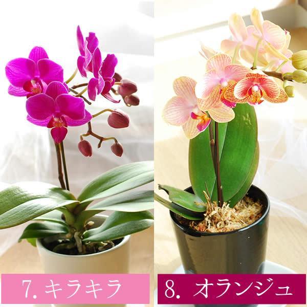 母の日 ギフト 花 母の日 花鉢 プレゼント 花とスイーツ 2020 ギフトランキング 胡蝶蘭 鉢植え お菓子|oimoya|08