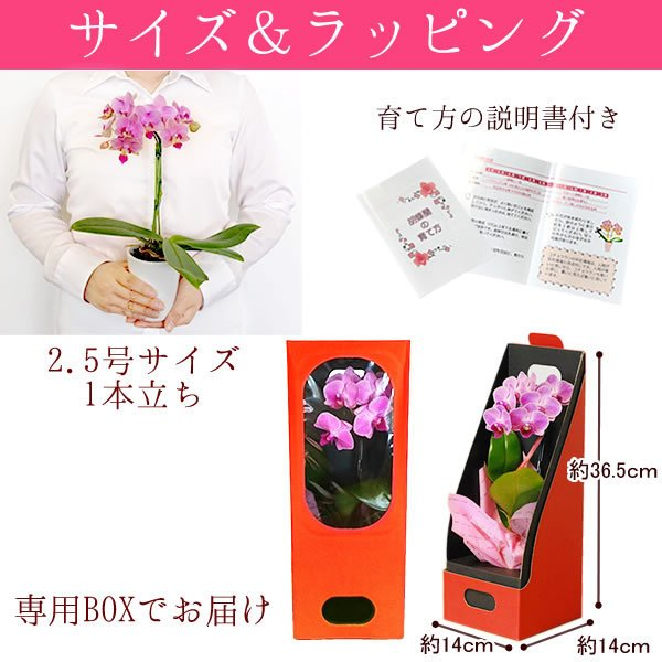 母の日 ギフト 花 母の日 花鉢 プレゼント 花とスイーツ 2020 ギフトランキング 胡蝶蘭 鉢植え お菓子|oimoya|10