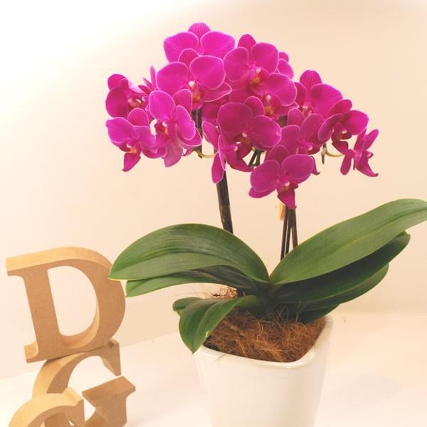 母の日 花 ギフト 2019 mothersday 鉢植え スイーツ カーネーション以外 oimoya 09