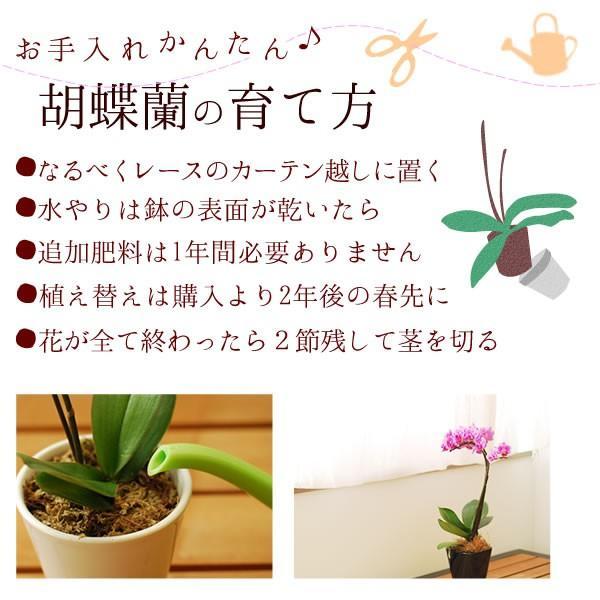 母の日プレゼント 2018 花ギフト 胡蝶蘭 ピカソ バームクーヘン スイーツセット|oimoya|04