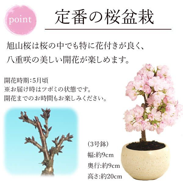 母の日 花 ギフト 母の日プレゼント 2019 mothersday 鉢植え スイーツ カーネーション以外 oimoya 04