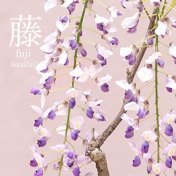 母の日ギフト 2018 花 ランキング 盆栽 藤 どら焼き スイーツセット oimoya 03