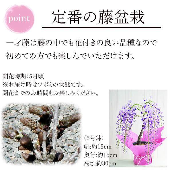 母の日ギフト 2018 花 ランキング 盆栽 藤 どら焼き スイーツセット oimoya 04