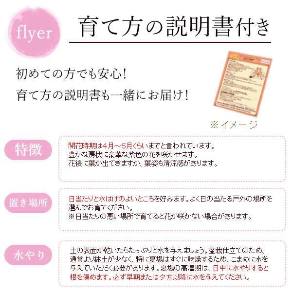 母の日ギフト 2018 花 ランキング 盆栽 藤 どら焼き スイーツセット|oimoya|05