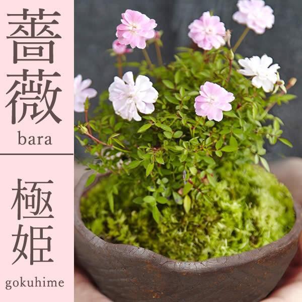 母の日 花 ギフト 母の日プレゼント 2019 mothersday 鉢植え スイーツ カーネーション以外|oimoya|02