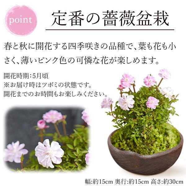 母の日 花 ギフト 母の日プレゼント 2019 mothersday 鉢植え スイーツ カーネーション以外|oimoya|04