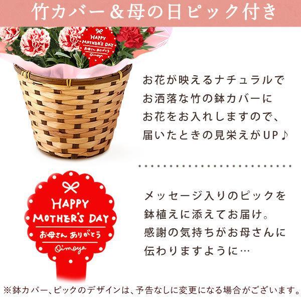 母の日 花 ギフト 母の日プレゼント スイーツ 2019 mothersday カーネーション 鉢植え お菓子|oimoya|12