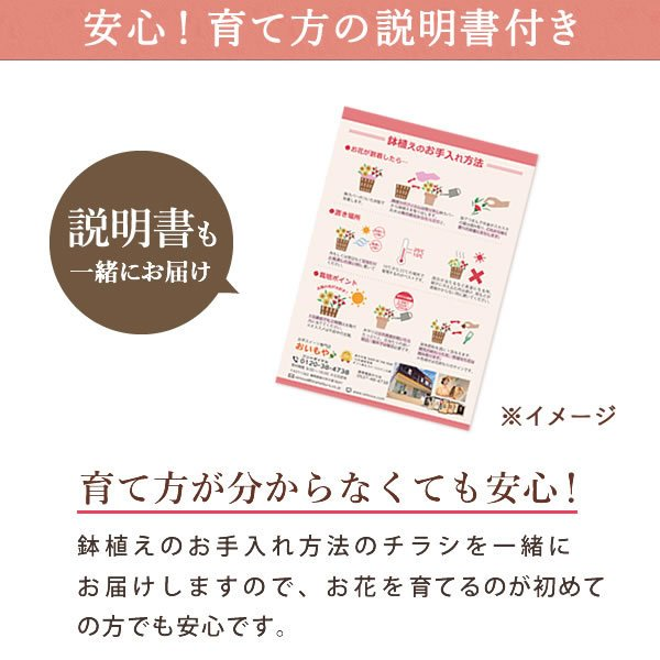 母の日 ギフト 花 母の日 プレゼント カーネーション 鉢植え 花鉢 花とスイーツ 2020 ギフトランキング お菓子|oimoya|13