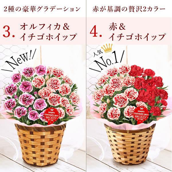 母の日 花 ギフト 母の日プレゼント スイーツ 2019 mothersday カーネーション 鉢植え お菓子|oimoya|05