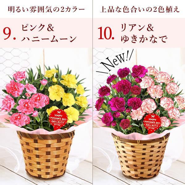 母の日 花 ギフト 母の日プレゼント スイーツ 2019 mothersday カーネーション 鉢植え お菓子|oimoya|08