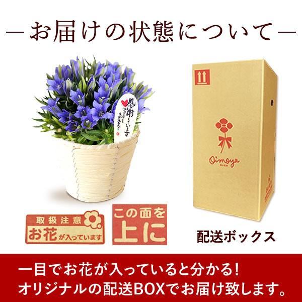 母の日 花 ギフト 母の日プレゼント 2019 ランキング mothersday 鉢植え スイーツ カーネーション以外|oimoya|12