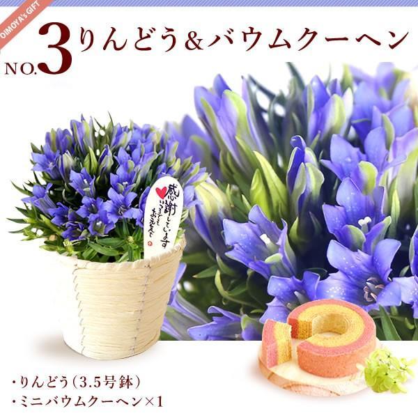 母の日 花 ギフト 母の日プレゼント 2019 ランキング mothersday 鉢植え スイーツ カーネーション以外|oimoya|07