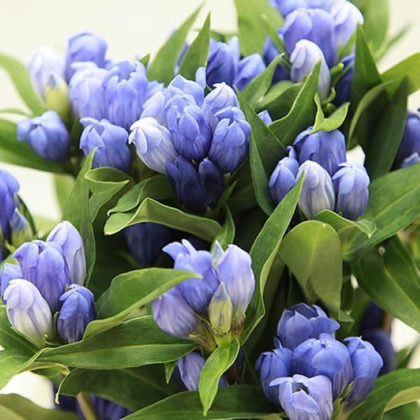 母の日 花 ギフト 母の日プレゼント 2019 ランキング mothersday 鉢植え スイーツ カーネーション以外|oimoya|08