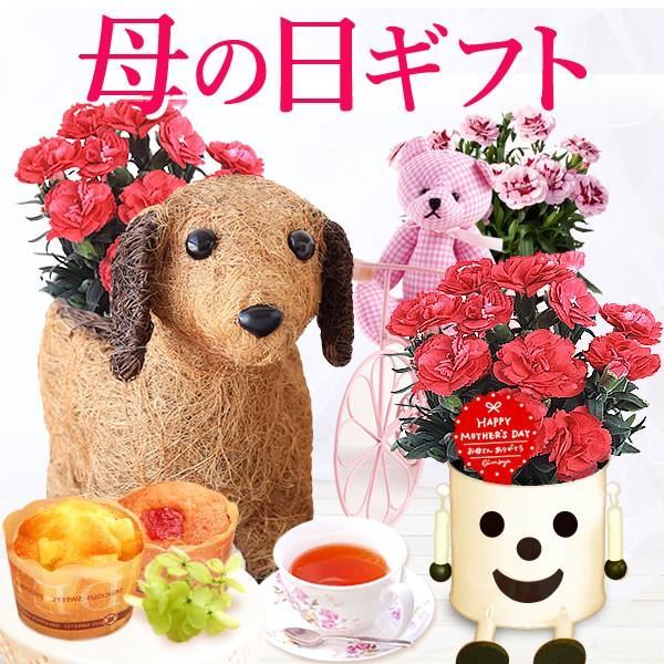 敬老の日 プレゼント 花 敬老の日 鉢植え スイーツ|oimoya
