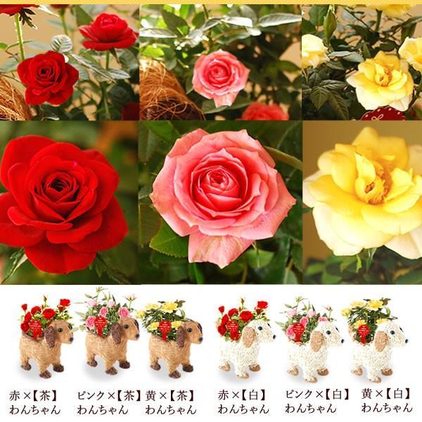 母の日 ギフト 花 母の日 カーネーション プレゼント 花とスイーツ 2020 ギフトランキング 鉢植え お菓子|oimoya|10