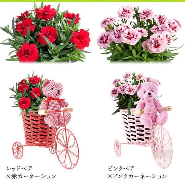 母の日 ギフト 花 母の日 カーネーション プレゼント 花とスイーツ 2020 ギフトランキング 鉢植え お菓子|oimoya|12