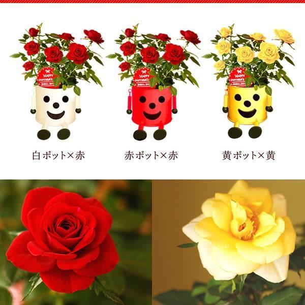 敬老の日 プレゼント 花 敬老の日 鉢植え スイーツ|oimoya|07