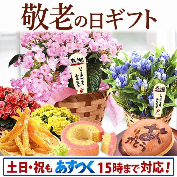 母の日プレゼント ギフト ランキング mothersday 花 スイーツ 限定ギフト あじさい 鉢植え 5号鉢|oimoya