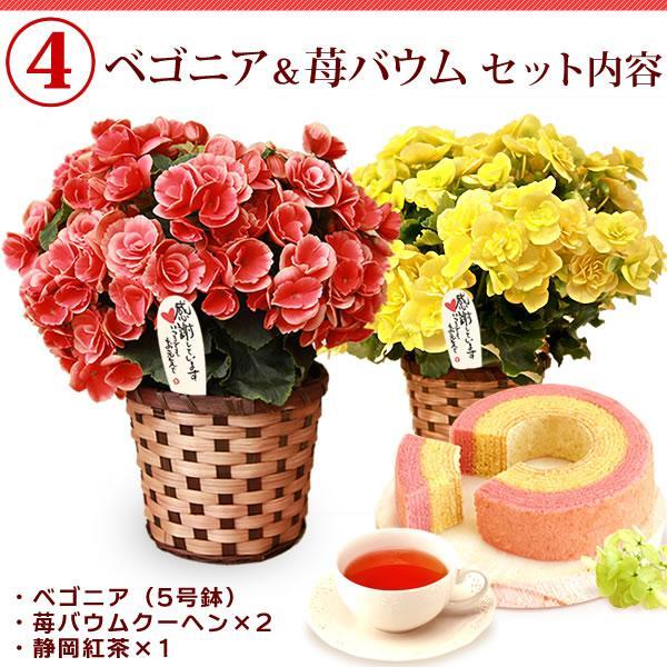 母の日プレゼント ギフト ランキング mothersday 花 スイーツ 限定ギフト あじさい 鉢植え 5号鉢|oimoya|12
