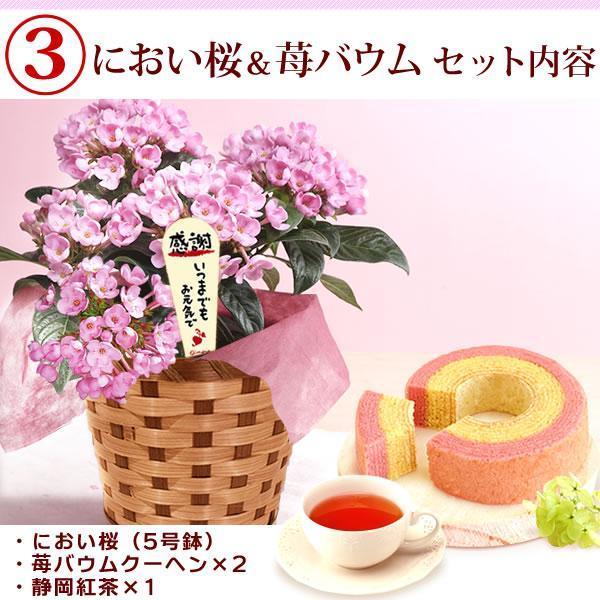 母の日プレゼント ギフト ランキング mothersday 花 スイーツ 限定ギフト あじさい 鉢植え 5号鉢|oimoya|09