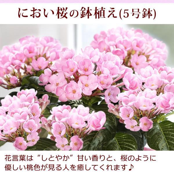母の日プレゼント ギフト ランキング mothersday 花 スイーツ 限定ギフト あじさい 鉢植え 5号鉢|oimoya|10