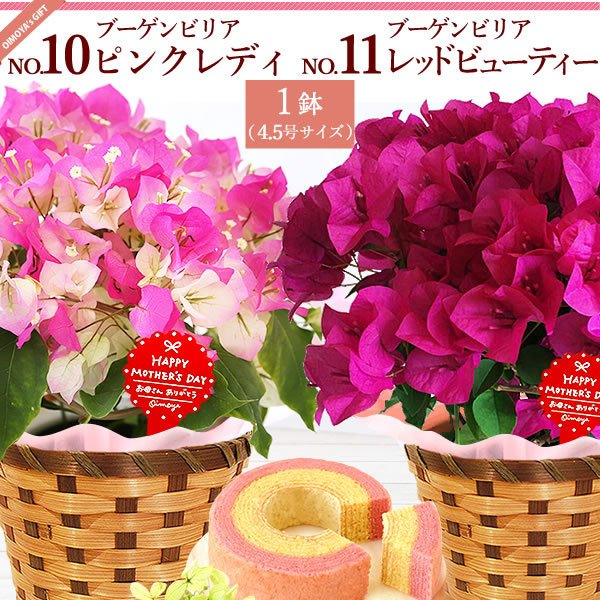 母の日 花 ギフト 母の日プレゼント 2019 mothersday 鉢植え スイーツ カーネーション以外|oimoya|12