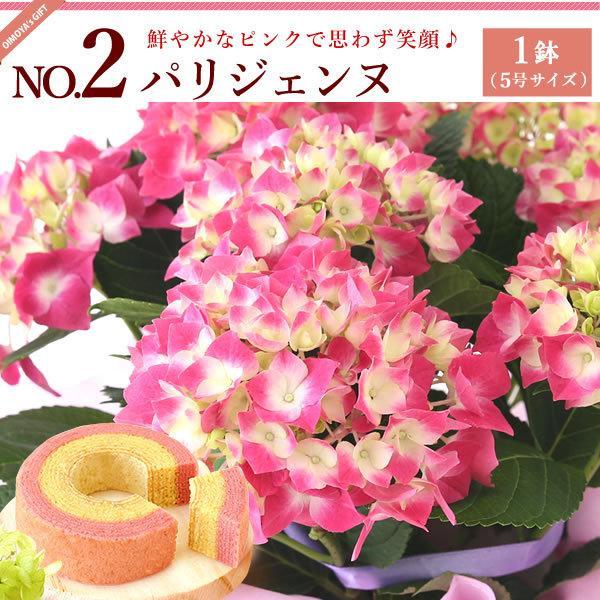 母の日ギフト ランキング 2018 mothersday 花 スイーツ フラワー ギフト 鉢植え あじさい 5号鉢|oimoya|04
