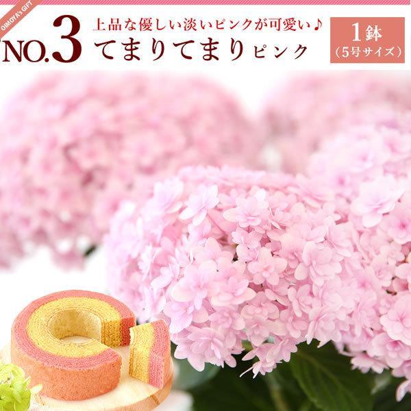 母の日ギフト ランキング 2018 mothersday 花 スイーツ フラワー ギフト 鉢植え あじさい 5号鉢|oimoya|05