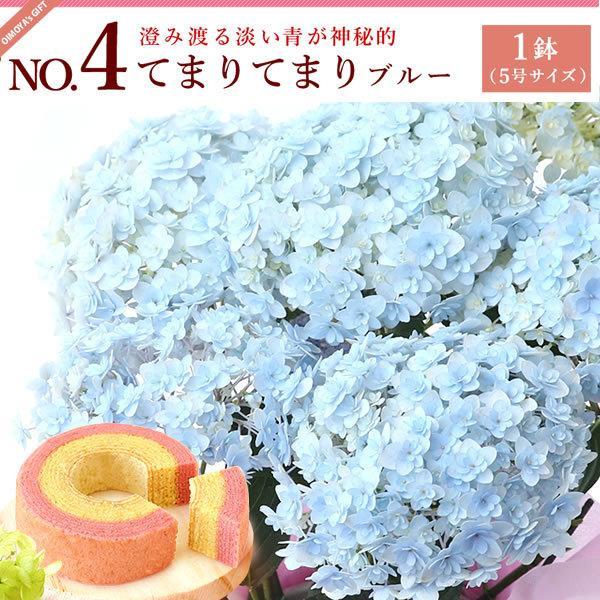 母の日ギフト ランキング 2018 mothersday 花 スイーツ フラワー ギフト 鉢植え あじさい 5号鉢|oimoya|06