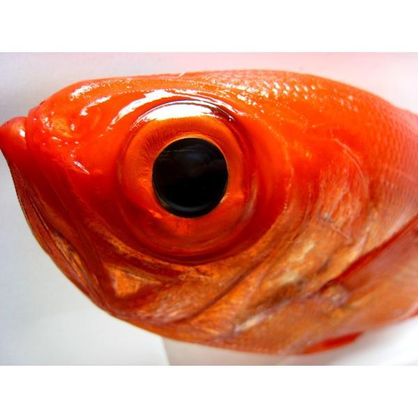 (国産)金目鯛1kg前後 千葉県産・静岡県産・高知県産の中から一番鮮度の良い物を発送します|oishii-sakana|02