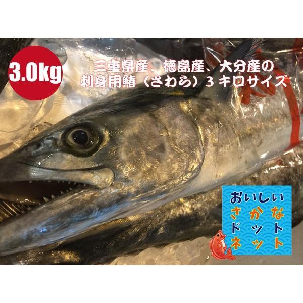 [美味しい魚特選海鮮ギフト]三重県産、徳島産、大分産 釣り鰆(さわら)1尾3.0kg前後[国産][冷蔵便]|oishii-sakana