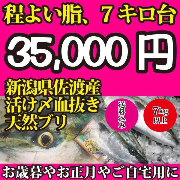 2021年入荷次第発送開始!新潟県佐渡産超特大天然寒ブリ7キロ以上(活け〆血抜き神経抜き)