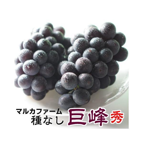 巨峰 茨城県  巨峰予約 ぶどう フルーツ 朝採り 巨峰 秀2房 1房500〜800g  ブドウ 種無し 葡萄 ギフト 甘い 美味しい お取り寄せ 産地直送