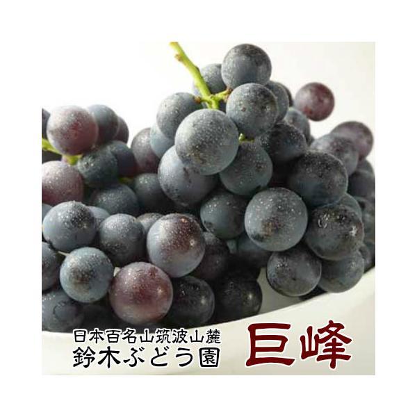 50箱限定 お彼岸に 訳あり 巨峰 茨城県  巨峰予約 ぶどう フルーツ 巨峰 種あり 約1.5kg ご家庭用 ブドウ 葡萄 甘い 美味しい お取り寄せ 産地直送