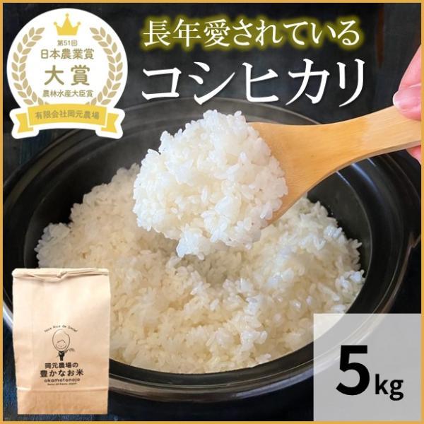 米 お米 4.5kg 1袋 コシヒカリ 石川県産 令和元年産 白米 精白米 生産農家 農家直送米