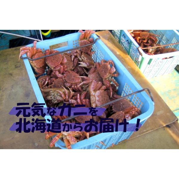 毛ガニ 北海道産 約570g×2尾入り ボイル済 送料無料 ギフト カニ かに 蟹|okhotsk-ajikikoh|08