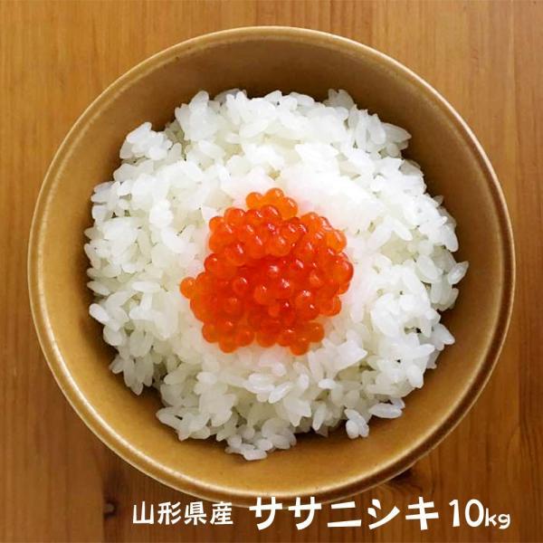 山形県庄内産 ササニシキ 10kg  【10kgX1袋】  選べます 【玄米・白米・無洗米】