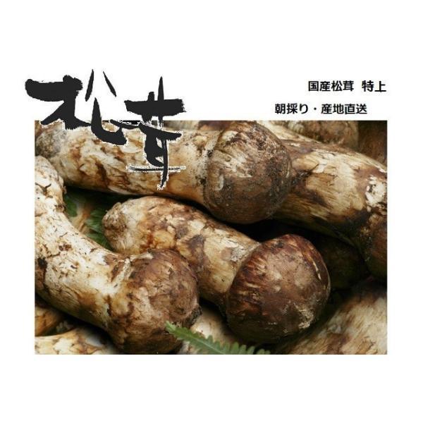 松茸 国産 松茸 特上(蕾)約1kg 奥会津産 岩手県産 マツタケを採りたて 新鮮 産地直送 ギフト対応 送料無料