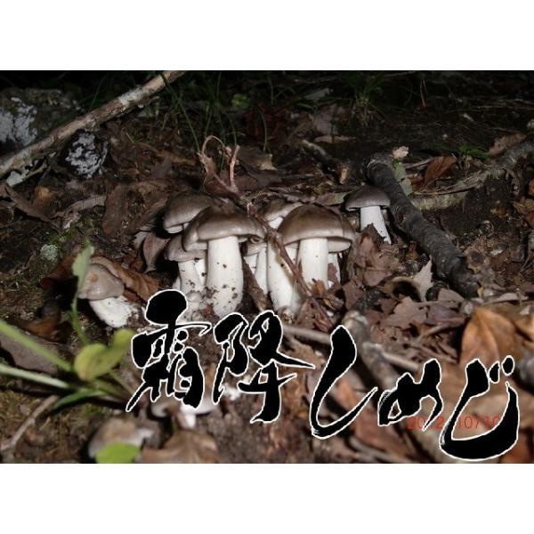 天然キノコ シモフリシメジ(黒シメジ・銀茸)150g 送料無料 秋の味覚 山の幸 ギフト対応